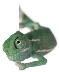 Home improvement, Chameleon, Concept Interiors, seemless service